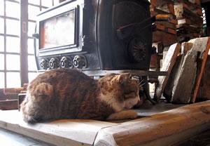 北温泉の猫